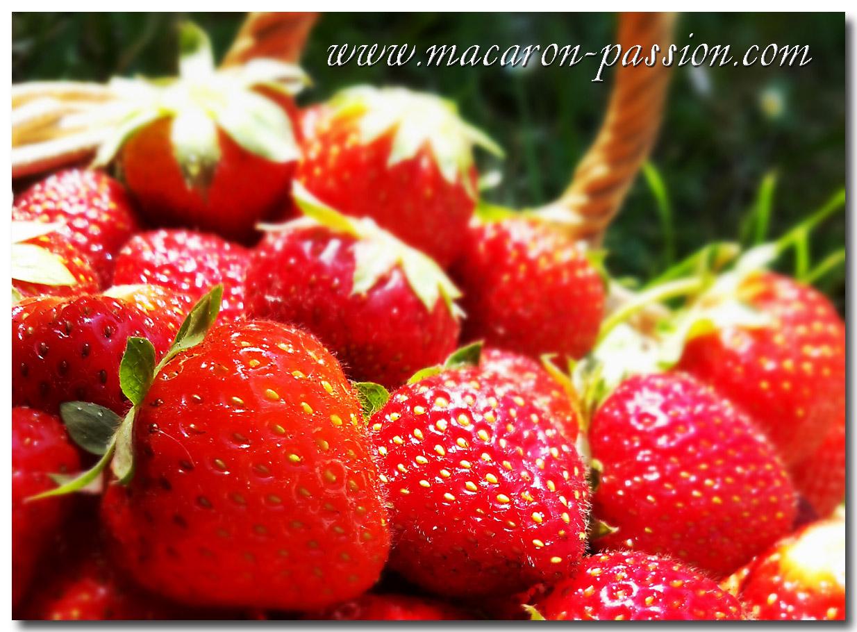 fraises fabulette C